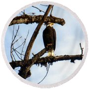 Round Beach Towel featuring the photograph Perched Bald Eagle by Sadie Reneau