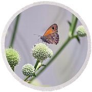 Perched Butterfly No. 255-1 Round Beach Towel by Sandy Taylor