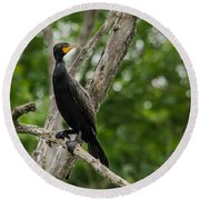 Perched Double-crested Cormorant Round Beach Towel