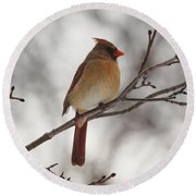 Perched Female Red Cardinal Round Beach Towel by Debbie Oppermann