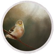 Round Beach Towel featuring the photograph Perched Goldfinch by Darren Fisher