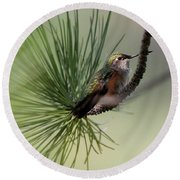 Perched In A Pine Round Beach Towel