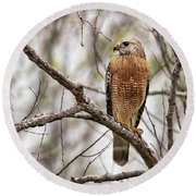 Perched Red Shouldered Hawk Round Beach Towel
