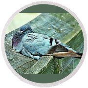 Perched Rock Dove Round Beach Towel