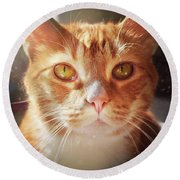 Percy In The Sun Round Beach Towel