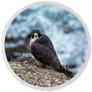 Peregrine Falcon - Here's Looking At You Round Beach Towel