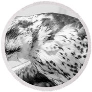 Peregrine Falcon In Black And White Round Beach Towel