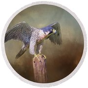 Peregrine Falcon Taking Flight Round Beach Towel