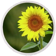 Perfect Sunflower Round Beach Towel