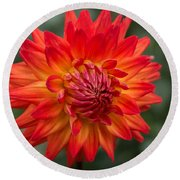 Round Beach Towel featuring the photograph Perfectly Dahlia by Arlene Carmel