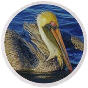 Perky Pelican II Round Beach Towel by Larry Nieland