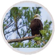 Perplexed Eagle Round Beach Towel