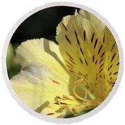 Round Beach Towel featuring the photograph Peruvian Lily by Victor K