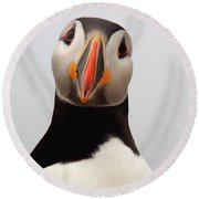 Peter The Puffin Round Beach Towel by Jane Axman
