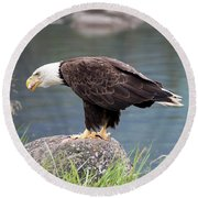 Petersburg Ak Bald Eagle 4 Round Beach Towel