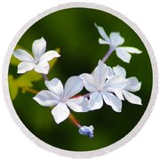 Petite Plumbago Blossoms Round Beach Towel by Richard Stephen