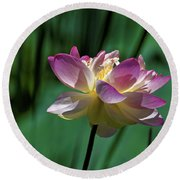 Round Beach Towel featuring the photograph Petty Pink Lotus by Paul Mashburn