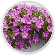 Round Beach Towel featuring the photograph Petunias On White Wall by Elena Elisseeva