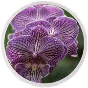 Round Beach Towel featuring the photograph Phalaenopsis Orchid by Cristina Stefan