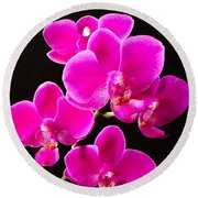 Round Beach Towel featuring the photograph Phalaenopsis Orchid - Fuchsia by Cristina Stefan