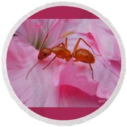 Pharaoh Ant Round Beach Towel