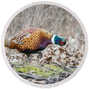 Pheasant In The Tree Line Round Beach Towel