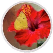 Phoebis Philea On A Hibiscus Round Beach Towel