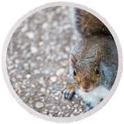 Photo Of Squirel Looking Up From The Ground Round Beach Towel