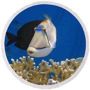 Picasso Fish And Klunzingerwrasse Round Beach Towel