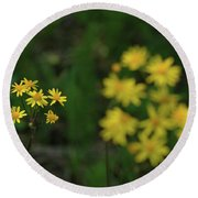 Round Beach Towel featuring the photograph Pick Me Daisies by LeeAnn McLaneGoetz McLaneGoetzStudioLLCcom