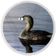 Round Beach Towel featuring the photograph Pied-billed Grebe by Robert Frederick