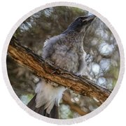 Pied Currawong Chick 1 Round Beach Towel