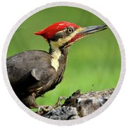 Round Beach Towel featuring the photograph Pileated 2 by Douglas Stucky