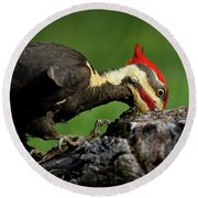 Round Beach Towel featuring the photograph Pileated 3 by Douglas Stucky