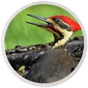 Round Beach Towel featuring the photograph Pileated by Douglas Stucky