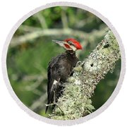 Pileated Perch Round Beach Towel