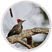 pileated Woodpecker 1068  Round Beach Towel by Michael Peychich