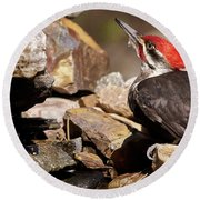 Pileated Woodpecker2 Round Beach Towel by Loni Collins