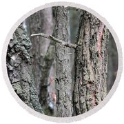Round Beach Towel featuring the photograph Pine And Birch by Dariusz Gudowicz