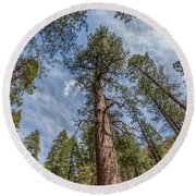 Pine Cathedral On The West Fork Round Beach Towel