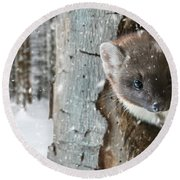 Pine Marten In Tree In Winter Round Beach Towel