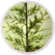 Round Beach Towel featuring the photograph Pine Shower by Brian Wallace