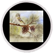 Pine Siskin Among The Pinecones Round Beach Towel by Thom Glace