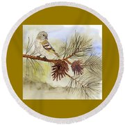 Pine Siskin Among The Pinecones Round Beach Towel