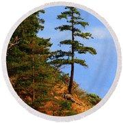 Pine Tree Along The Oregon Coast Round Beach Towel by Tom Janca