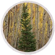 Pine Tree Among Aspens  4874 Round Beach Towel