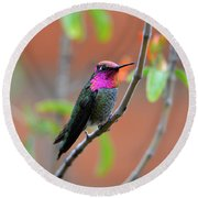Pink And Gold Anna's Hummingbird Round Beach Towel