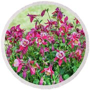 Round Beach Towel featuring the photograph Pink And White Columbine by Sue Smith