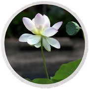 Pink And White Water Lily With Green Pod Round Beach Towel