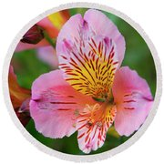 Pink And Yellow Flora Round Beach Towel